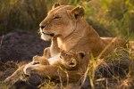 AnupShah_WildlifeHH_lg